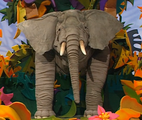 Ringo the Elephant