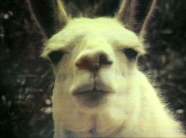 File:Llama!.jpg