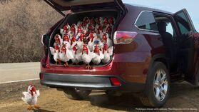 Toyota-23chickens&1Gonzo