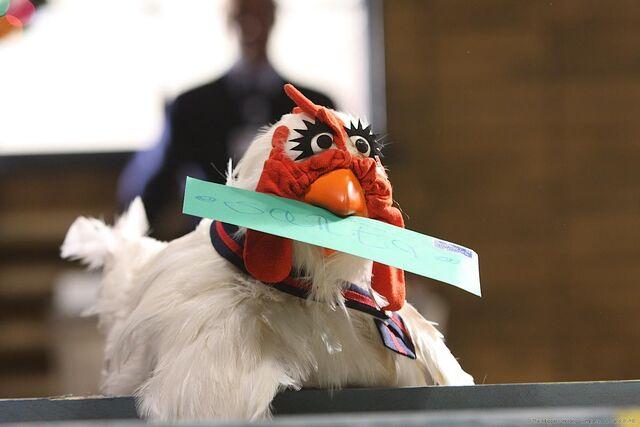 File:LTS-Chicken-USPS-Worker.jpg