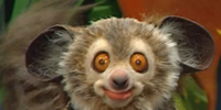 Billy Bob the Lemur