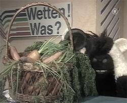 Wettenwas-carrots