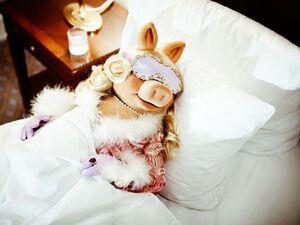 Ritz-Carlton Piggy