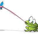 Lili frog