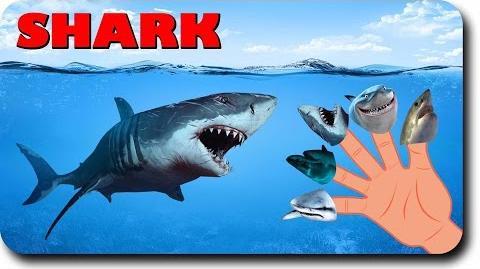 Finger Family Shark Family Nursery Rhyme Animal Finger Family Fish Finger Family for children