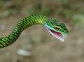 Angry snake.jpg