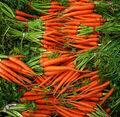 Carrot pile.jpg