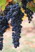 Las uvas azules