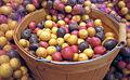 Colorful potatoes.jpg