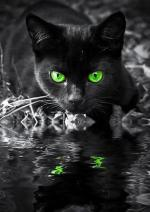 File:150px-BlackKitty.jpg