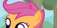 Scootaloo/Gallery