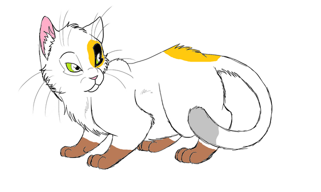 File:This is the Kind of Cat.png