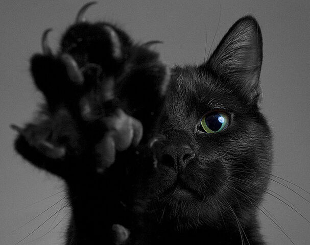 File:Black-cat-4.jpg