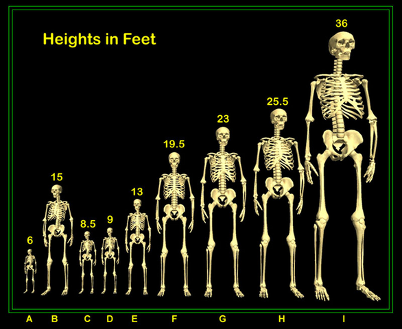 File:Giant Height Chart.png