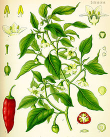File:-Illustration Capsicum annuum0.jpg