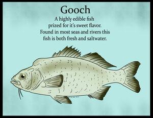Gooch Color