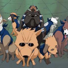 Nindža psi