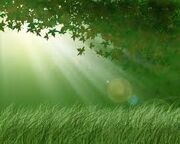 LightForest