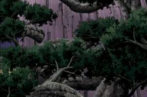 Birth Of Dense Woodland