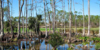 Southern Marshlands