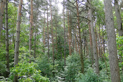 Plains Forest