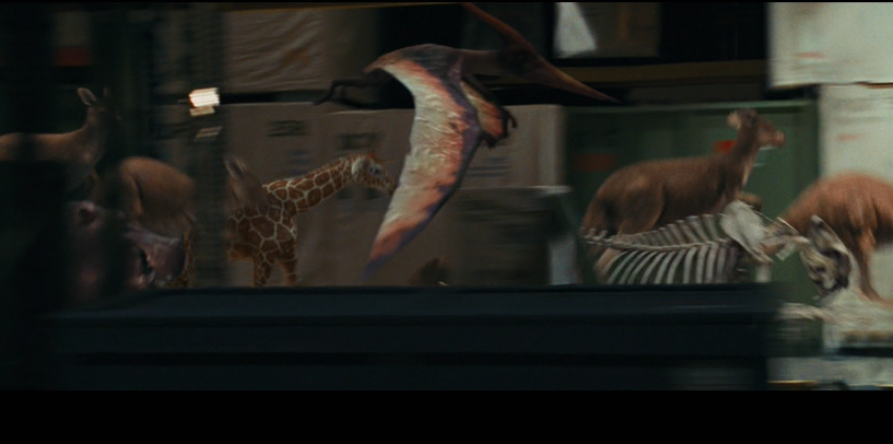 Pteranodon Night At The Museum Wiki Fandom Powered By