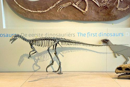 File:EoraptorWC (1).jpg