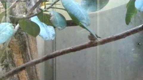 Unbekannter braun gescheckter kleiner Vogel im Zoo Augsburg - 18. Mai 2013