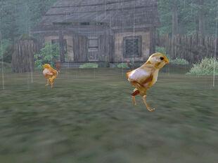 Chick01