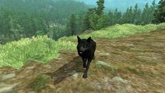 Senile Shadow Wolf