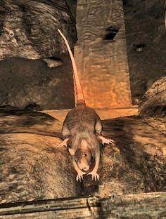 Pit rat
