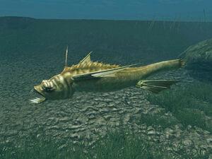 Slauterfish