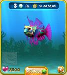 Pink Mandarinfish