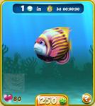 Pink Emperor Angelfish