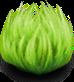 UI VIT Plants
