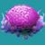 COR Violet Brain Coral