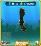 Green Dusky Batfish