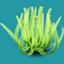ORN Green Sea Flower