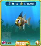 Golden Pajama Fish