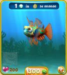 Orange Mandarinfish