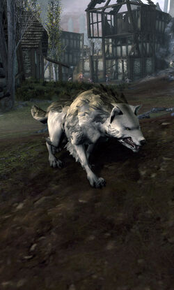Orc Wolf
