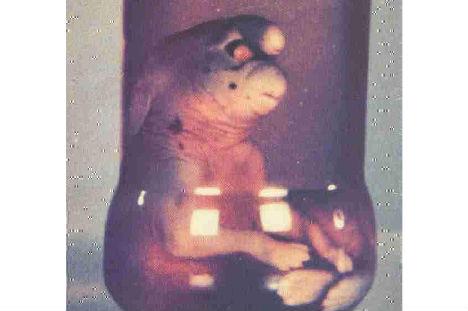 File:Cryptids-gnome-of-girona.jpg