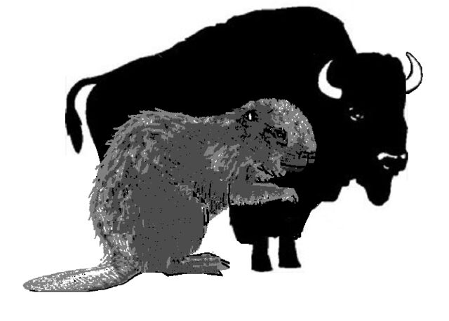 File:18. Giant Beaver to scale with Bison.jpg