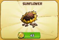 Sunflower new