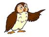 Little Bear Owl