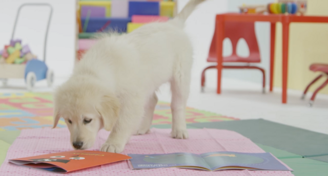 File:Nick Jr. Puppies CJ Story Time with the Pups.png