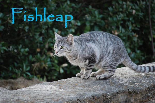 File:Fishleap.jpg