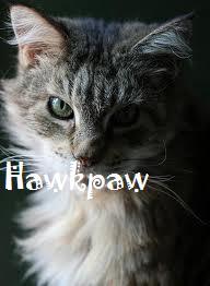 Hawkpaw