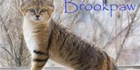 Brookpaw