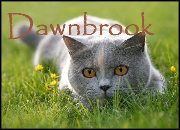 File:Dawnbrook.jpg